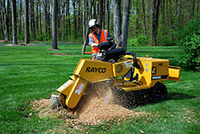 grinding a stump in yard